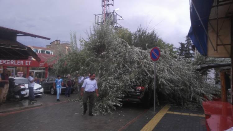Vezirköprü'de fırtına dolayısıyla ağaç devrildi
