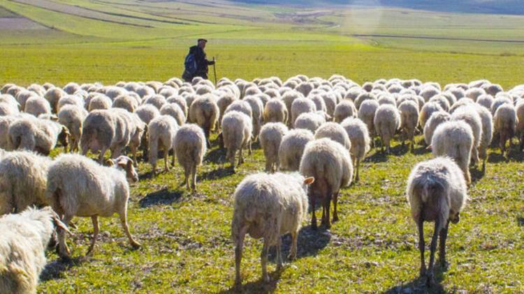 Çobanlık İçin Teşvik Hibesi :  5.000 TL