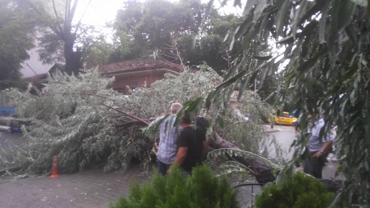 Fırtına Nedeniyle Çarşı Merkezinde Ağaç Devrildi