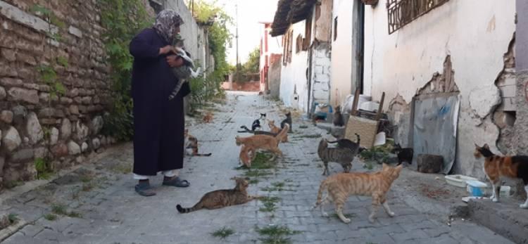 Evini, Sokak Hayvanları için Barınak Yaptı!